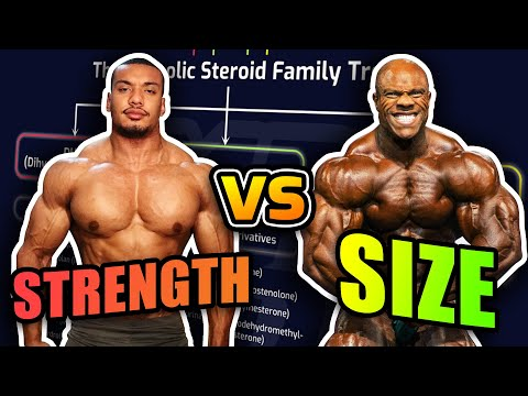 Powerlifter Vs. Bodybuilder Steroid Cycles How They Differ