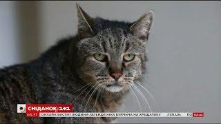 У Великій Британії помер кіт 1985 року народження