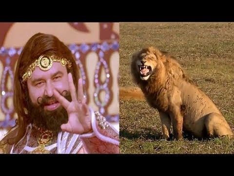 Ram Rahim and Lion Funny