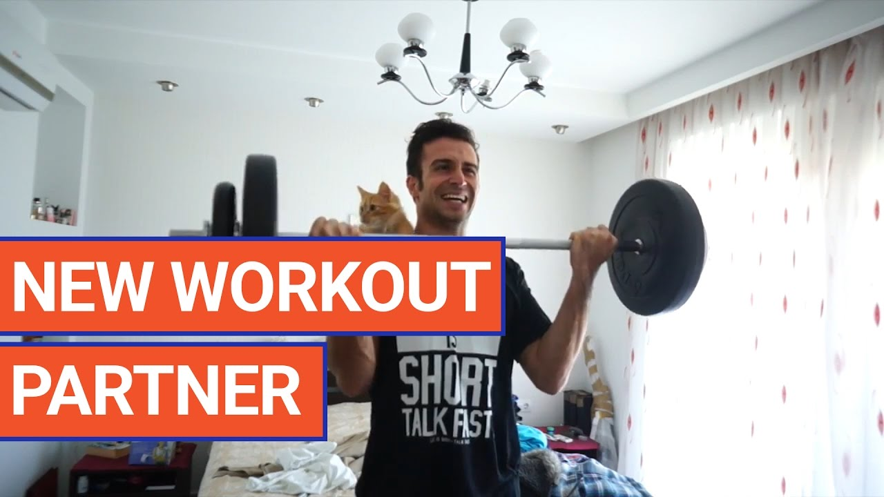 Cat Joins Workout Video 2017 | Daily Heart Beat