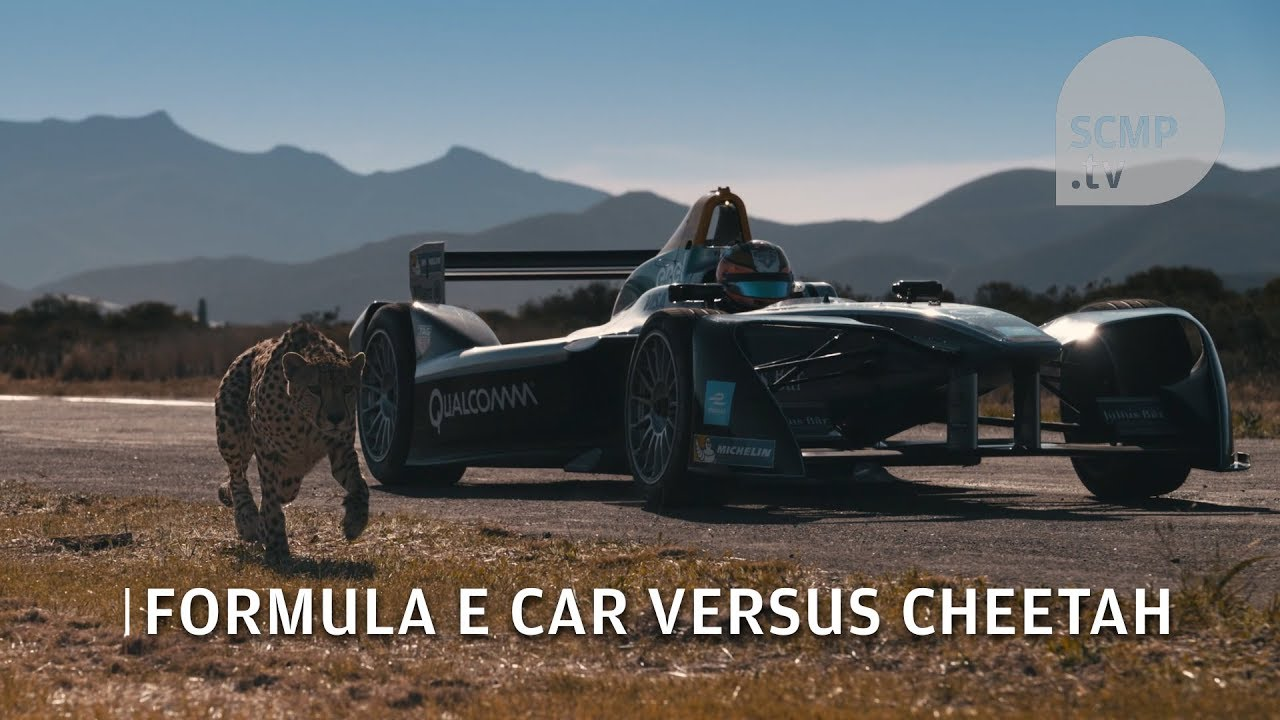 E car goes head-to-head with cheetah in drag race - YouTube Cheetah Audi R on aston martin cheetah, audi tt cheetah, beiber cheetah,