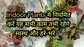 Indoor Plants रहेंगे स्वस्थ और हरे-भरे नियमित करें यॆ सभी काम,anvesha's creativity