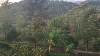 Luxury Resort on Tea Plantation, Kerala India