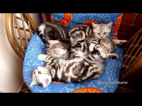 Cutest Cat Moments. Pile of snow tigers
