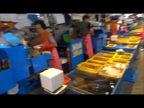 Touring Jagalchi Fish Market in Busan South Korea