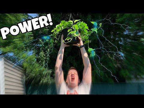 The POWER Of POTHOS PLANTS In An AQUARIUM!