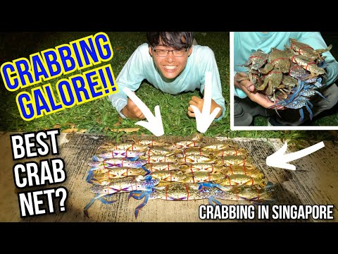 Crabbing In Singapore (This Crab Net Even Catches Fish!)