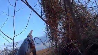 охота на гуся ВЕСНА 2016