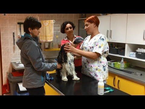 Veterinářka Lucie Míková vyšetřuje psa, který má problém se zády
