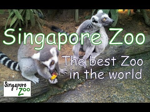 Singapore Zoo. The best Zoo of the world