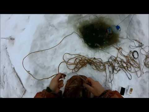 Ловля налима зимой на самоловы
