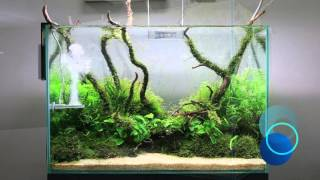 TWINSTAR M5 - Planted Tank in only 40 days! Unique details!
