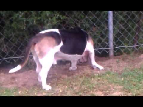 Shark cartilage cat dog cancer oil