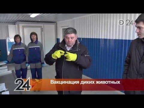 В Татарстане начали вакцинацию диких животных
