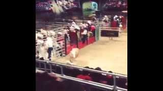 Bull Takes Out Photographer | Taking Life By the Horns