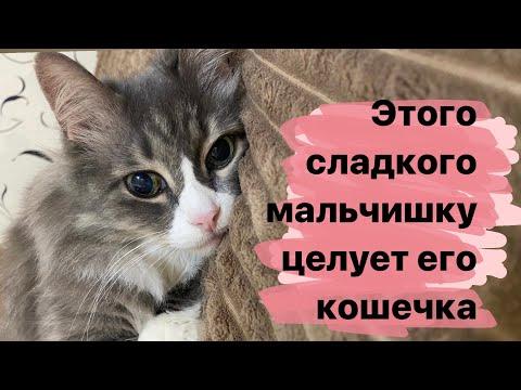 Вопрос: Почему кошки часто вылизывают друг друга?