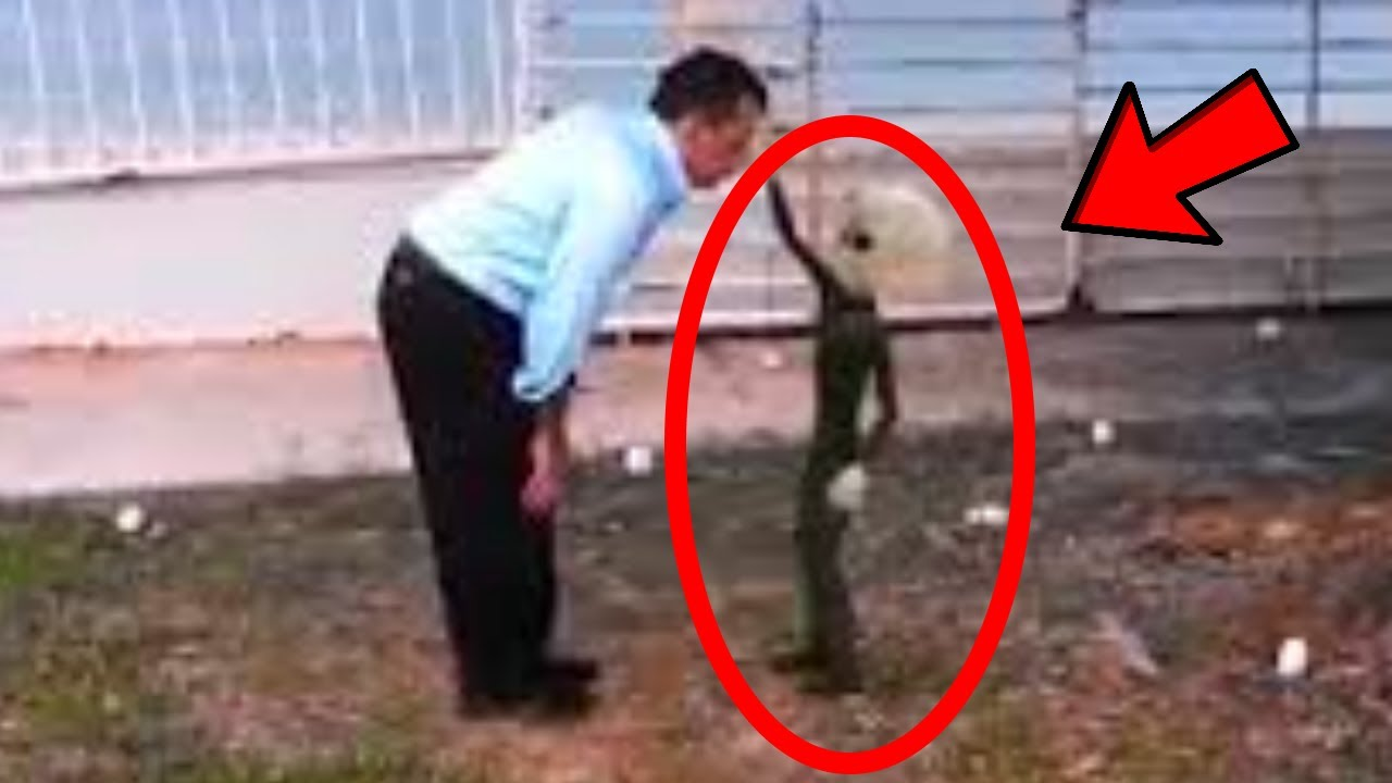 UFO occupants - Reptilian and grey alien pictures
