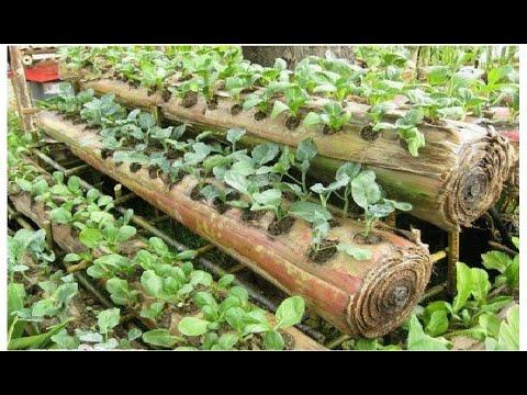 Amazing Farming ideas for Your Home & Garden