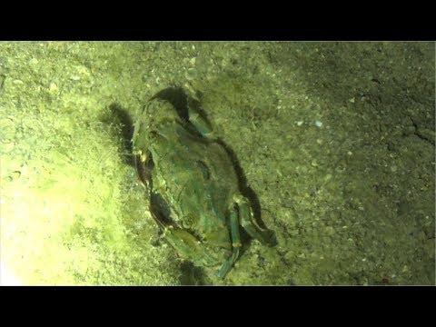 夜中に海で潮干狩りしてきた!