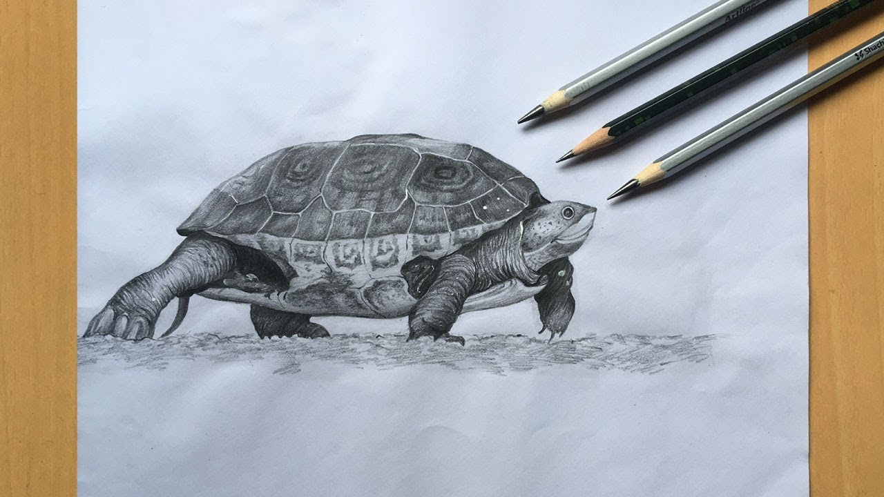Turtle drawing in pencil sea turtle pencil sketch step by step