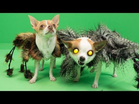 Mutant Giant Spider Dog 2 (SA Wardega) Halloween Prank