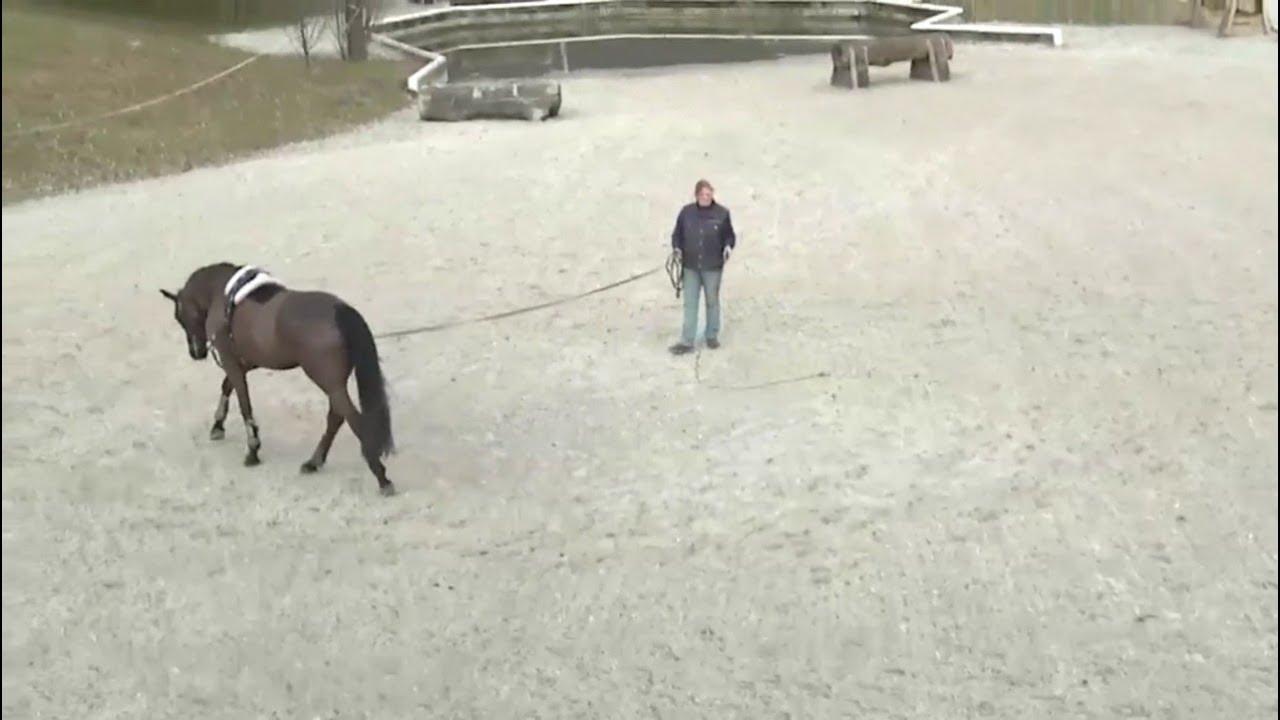 Die Longe - Pferde richtig longieren