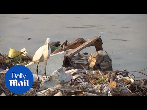 Gross! Locals Fish And Swim In Disgusting Polluted Rio Water - Daily Mail