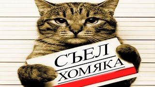 ТОП 1000 приколы про животных 2017 ТОПовая Подборка