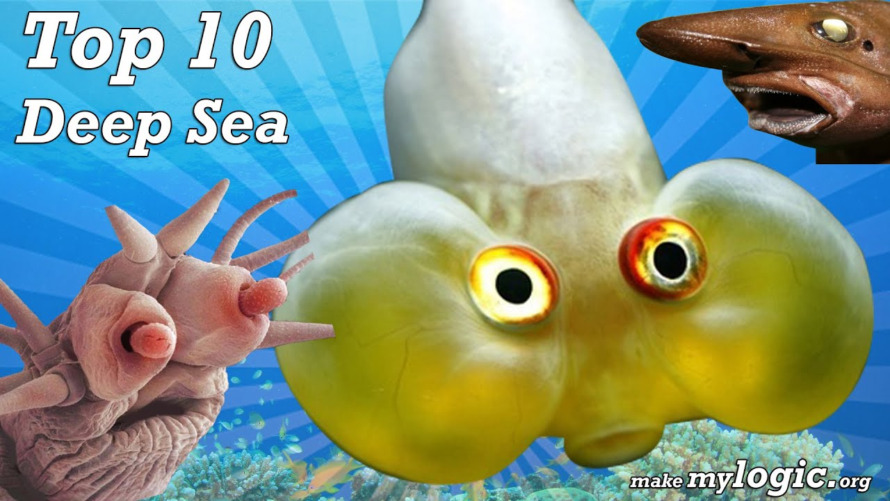 deep sea creatures top 10 most amazing sea creatures
