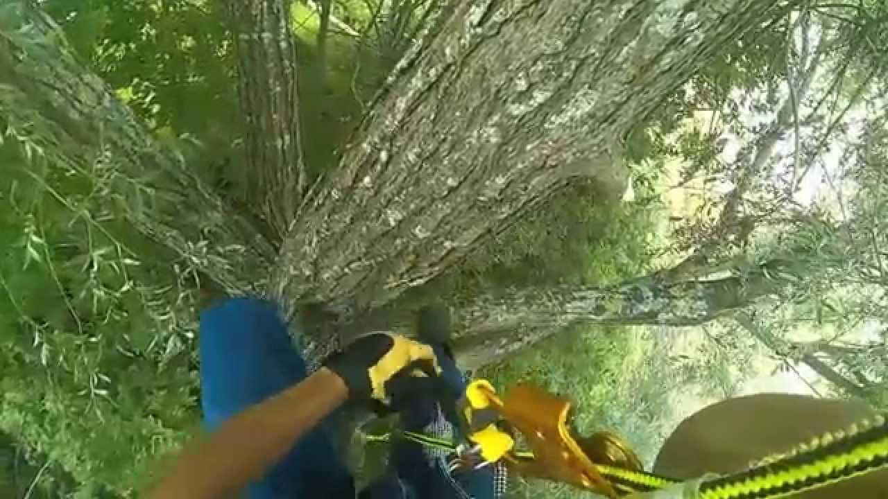 lagage grimper dans un arbre avec une corde youtube. Black Bedroom Furniture Sets. Home Design Ideas