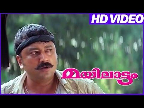 Mayilattam Malayalam Comedy Movie  Jayaram Action   Jayaram  Jagathy