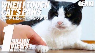 猫の手を触るとこうなります。 thumbnail
