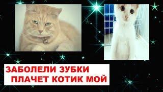 Песня про Котика Заболели зубки плачет котик мой