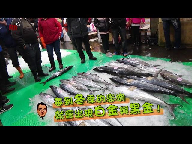 白金塗魠魚篇|魚夫行腳‧畫說台灣#52