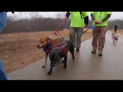 Dog Walking Volunteers