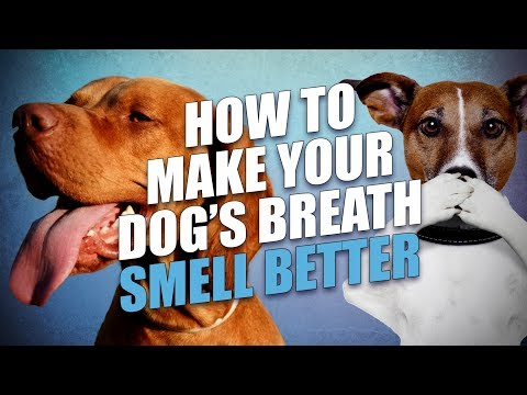 How To Make A Dog's Breath Smell Better - 5 Actionable Tips