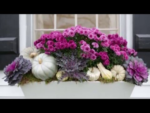 Top Fall Decorating Ideas for Your Window Boxes