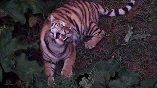 В Приморье идет борьба с браконьерами