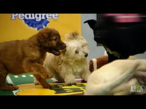 Top Ten Peppiest | Puppy Bowl X
