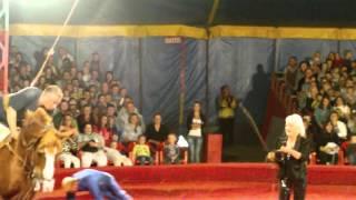 Полоцк цирк 2012  Прикол