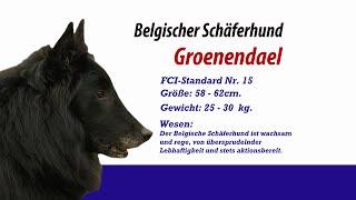Groenendael Belgischer Schäferhund - Meister Petz Tv Rasseportrait Mpt 135