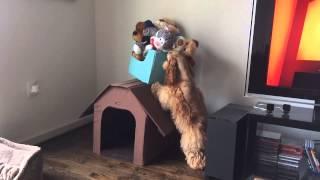 Puppy Crime Caught On Tape - Sebastian The American Cocker Spaniel