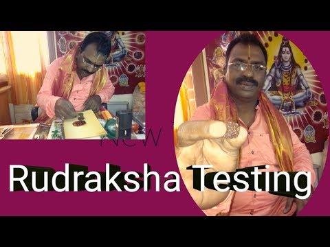 How to Identify Original Rudraksha Guessing and Testing in telugu