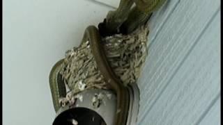 2007/07/22 滋賀県彦根市にて.民家周辺でツバメ(Hirundo rustica)が...