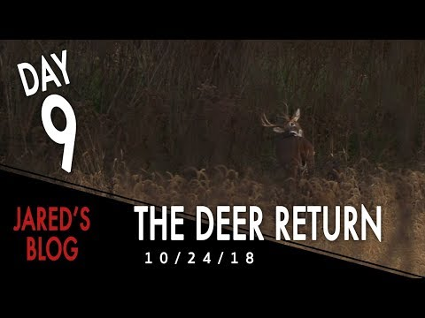 Jared Day 9: The Deer Return After The Flood