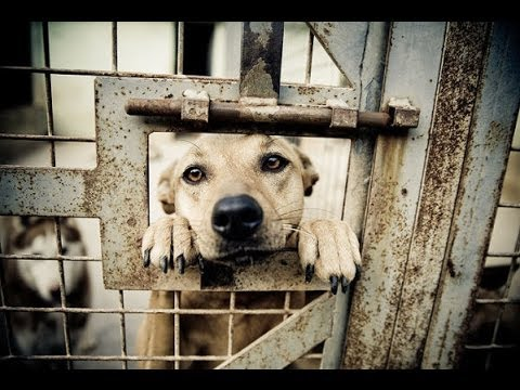 The Sad Truth Behind Animal Shelters ★★★★★