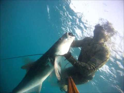 2014 spearfishing