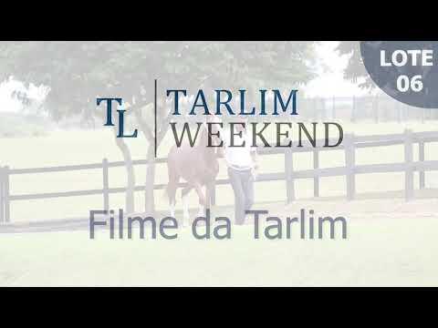 Lote 06 - Filme da Tarlim (Potros Tarlim)