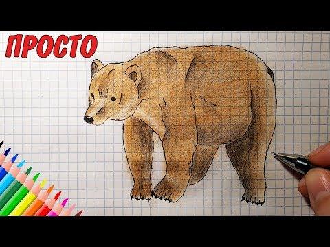 Как раскрасить медведя