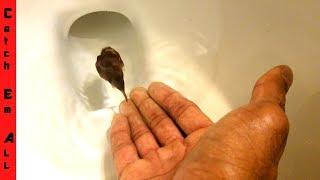 FLUSHING My AQUARIUM FISH Down the TOILET!